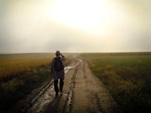 walk fitness teatox